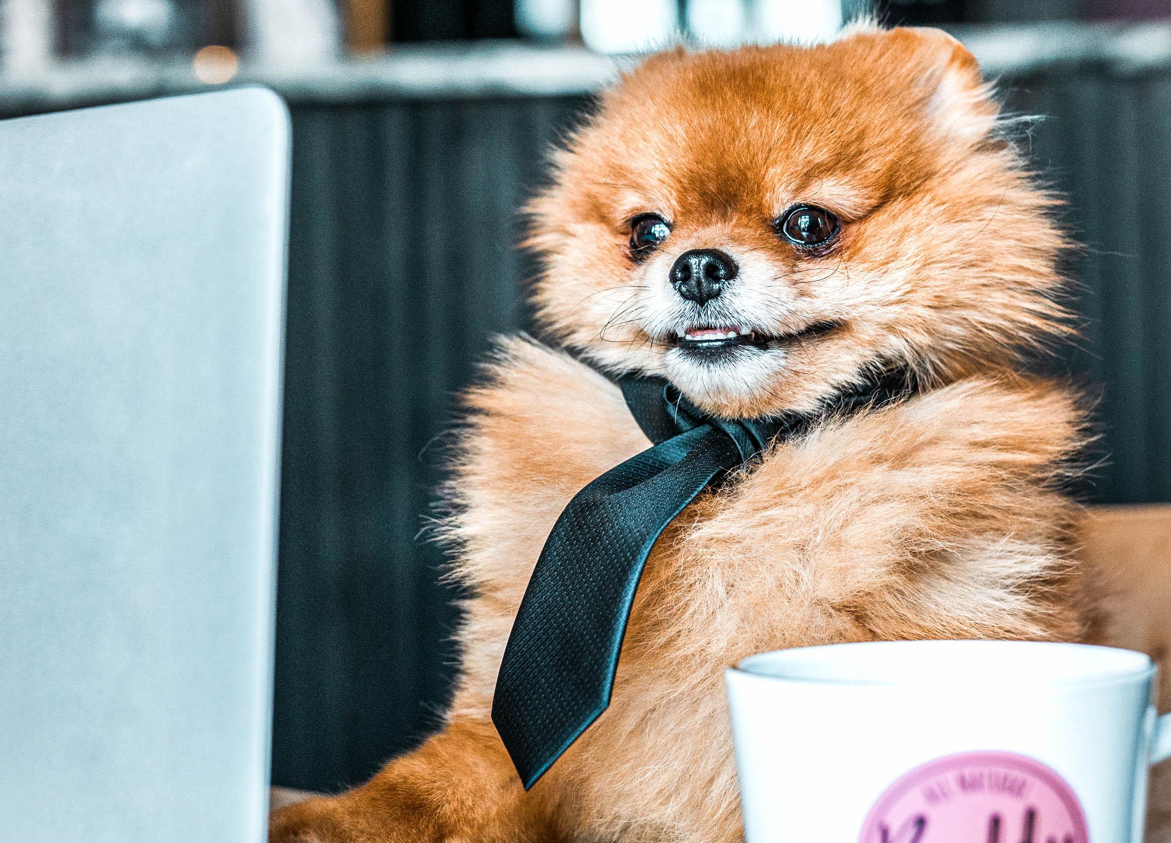 7 tips för en gladare kontorshund