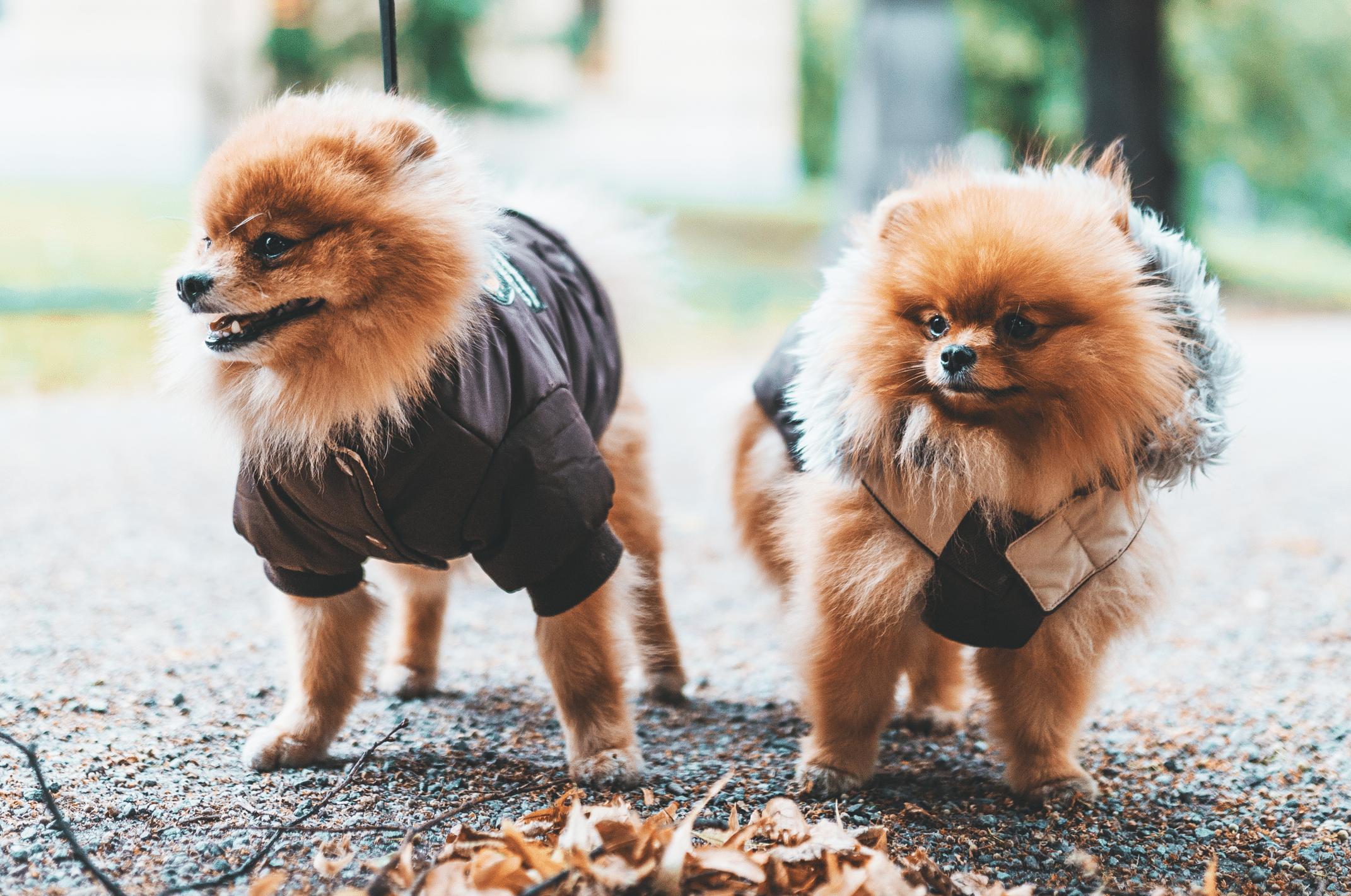 10 bästa parkerna för hundar i Stockholm