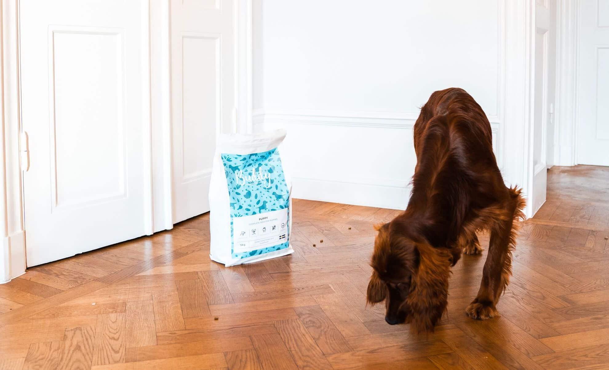 5 stimulerande sätt att mata din hund på