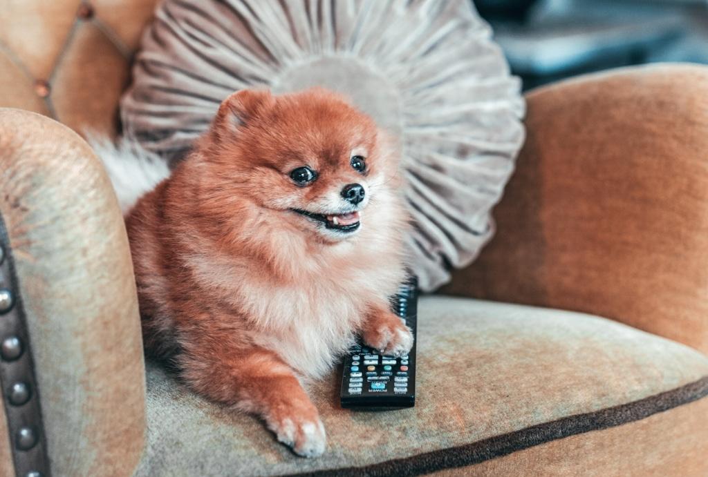 Filmer att se med din hund