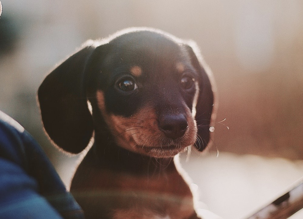 De 5 mest populära hundnamnen