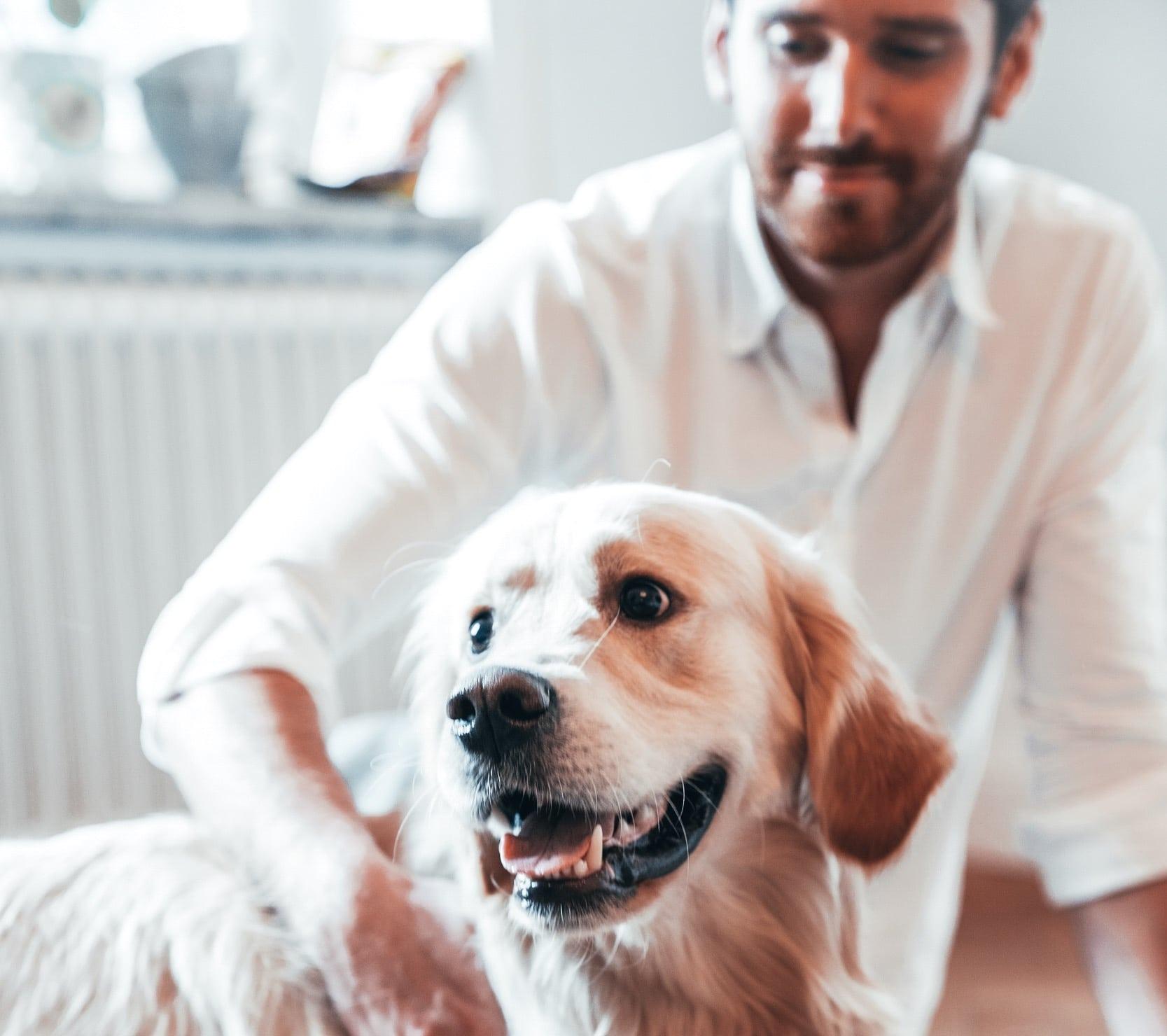 3 hälsofördelar med att ha hund