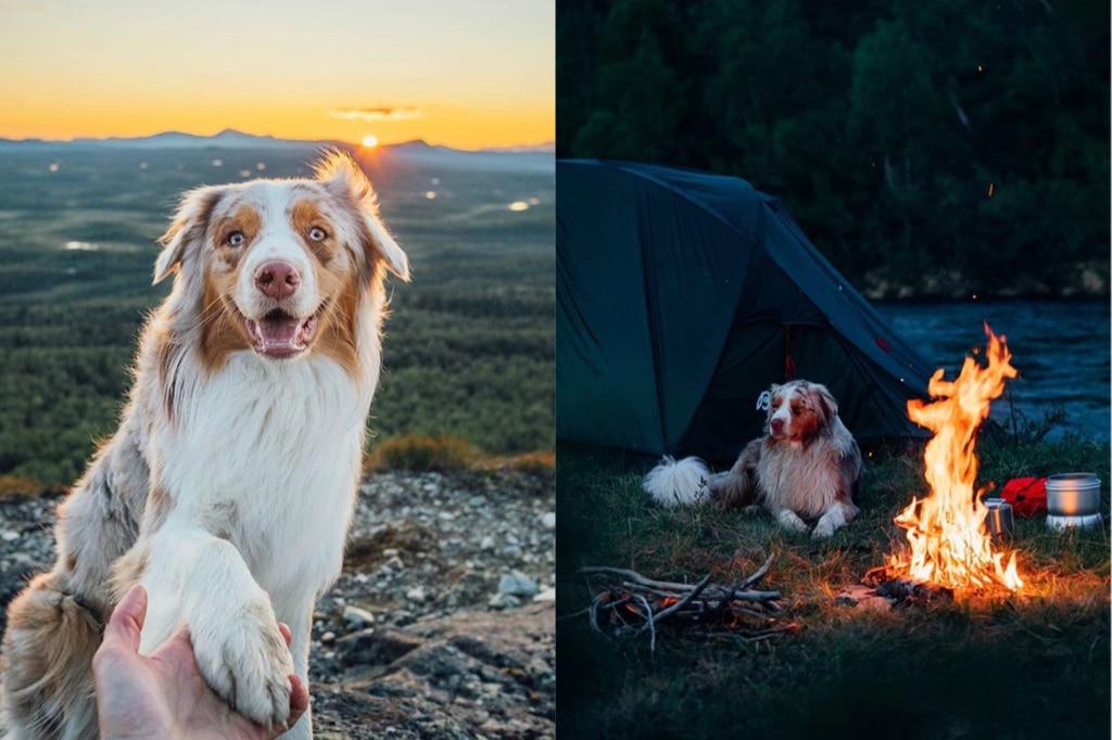 Intervju med Linus & Kiba: Att resa i Sverige med hund