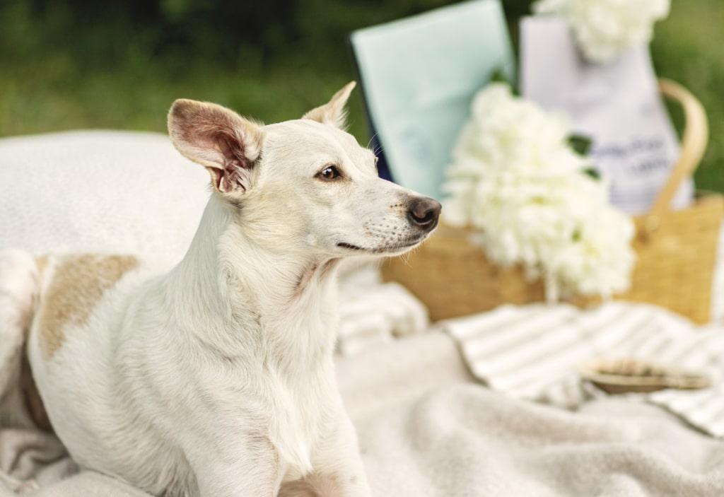 25 saker att göra med din hund i sommar