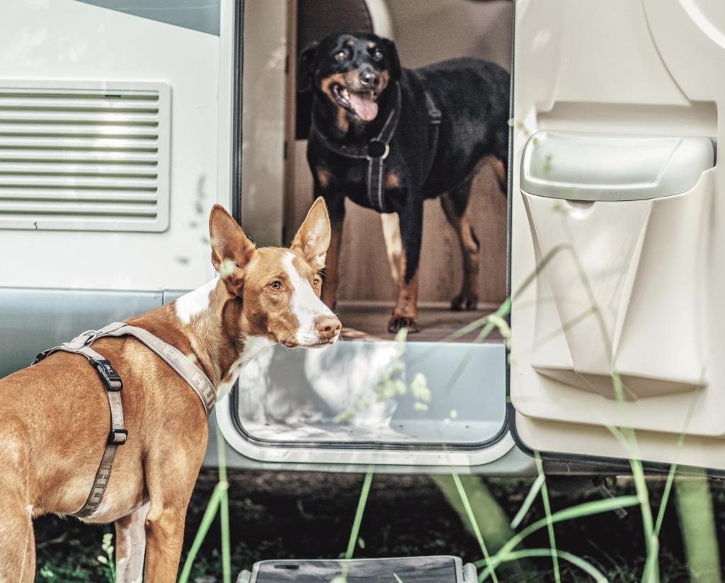 Roadtrip med hunden: 4 saker att tänka på