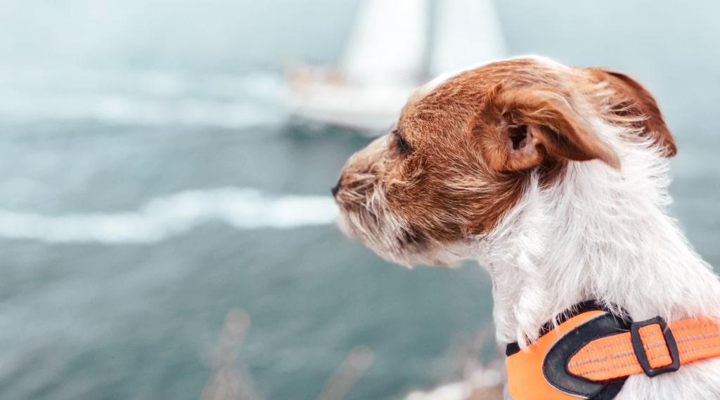 5 saker att tänka på när du åker båt med hunden