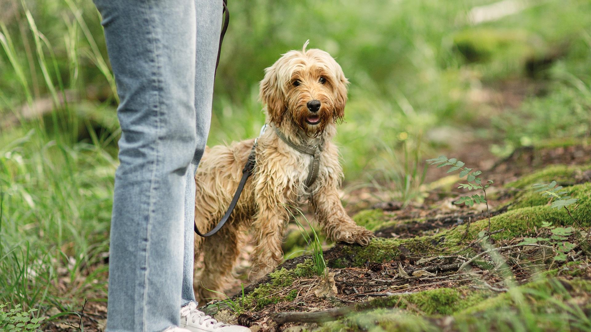 Därför bajsar din hund mer vid foderbyte