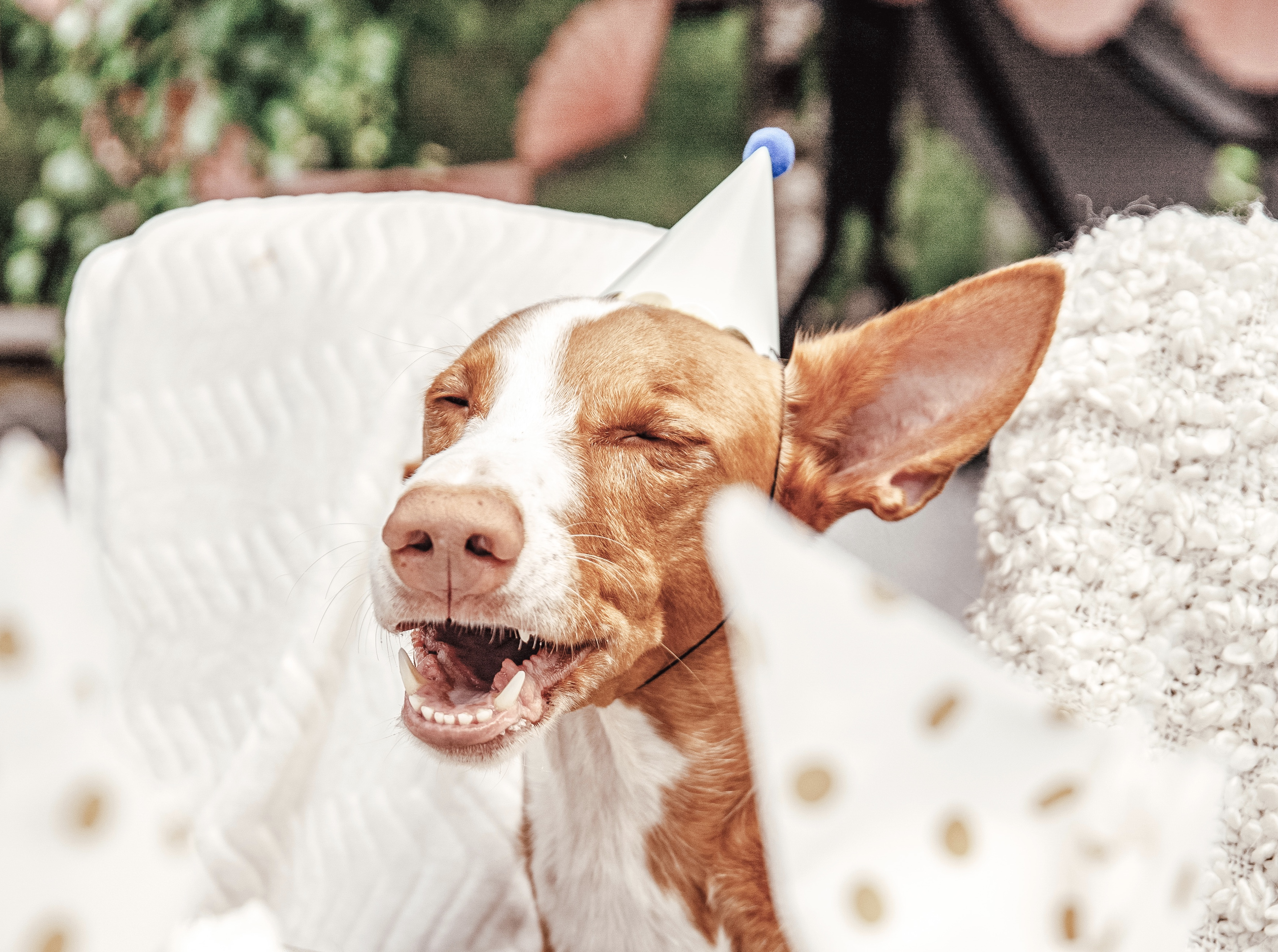 Så hundsäkrar du kräftskivan!