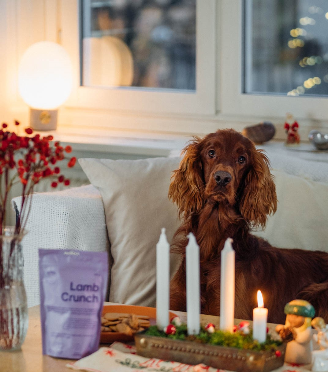 buddy pet foods_advent_nyttigt hundgodis
