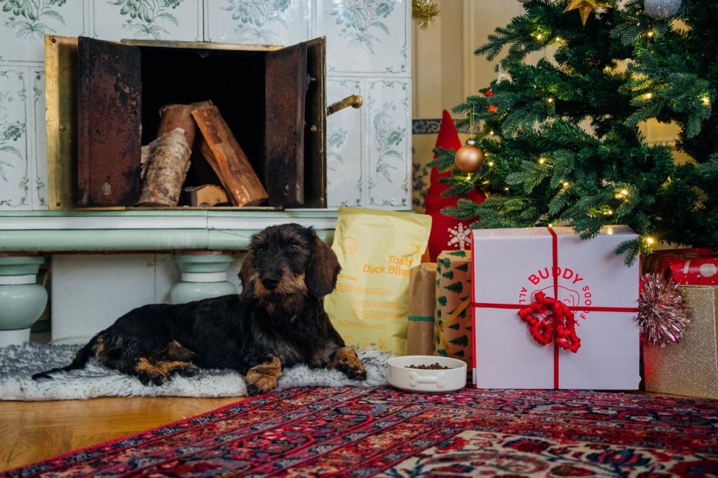 10 julklappstips till din hund