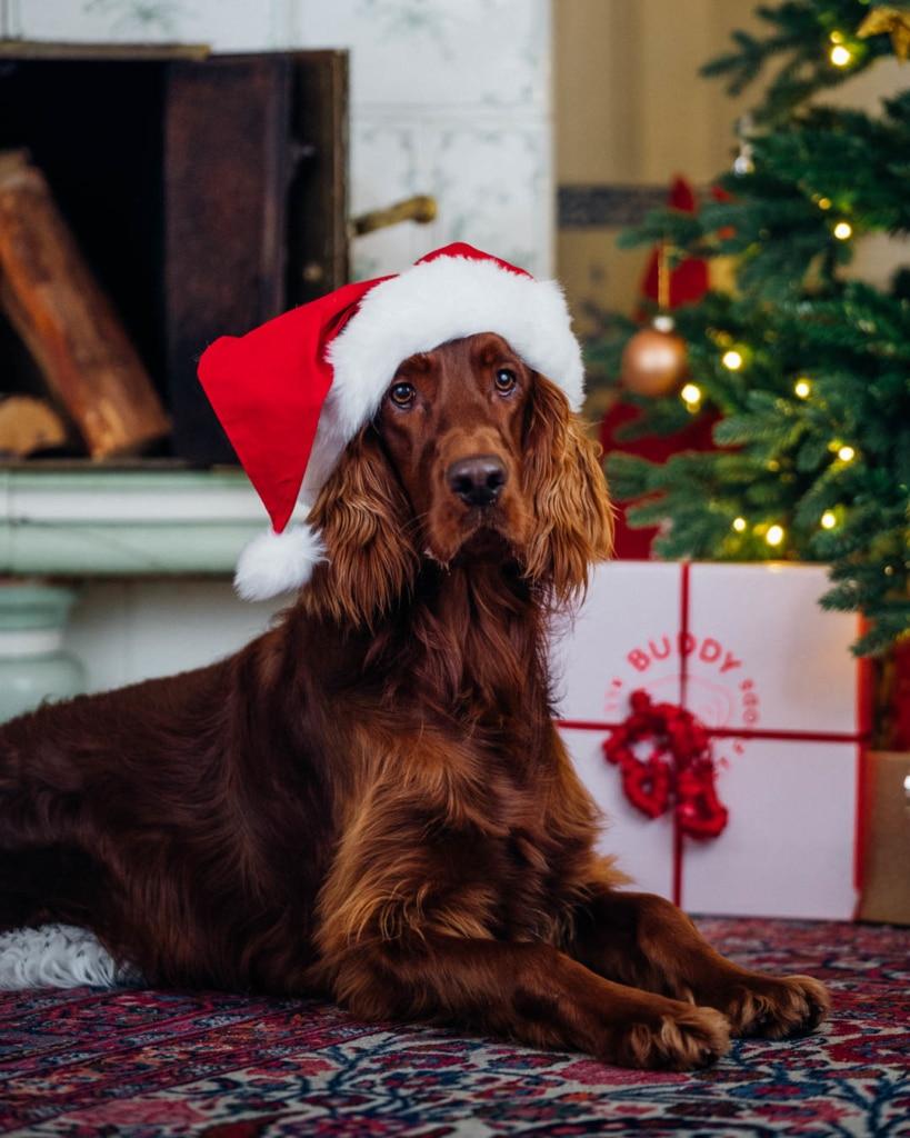 Fira jul med hund