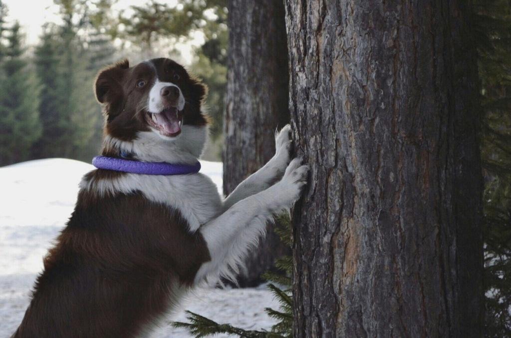 Godisträd – enkel & rolig aktiveringsövning
