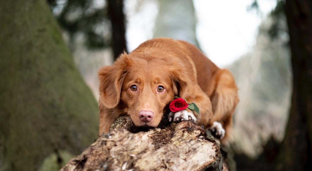 5 alla hjärtans dag presenter till din hund