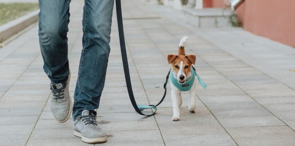 Drömmer du om en mer följsam hund?