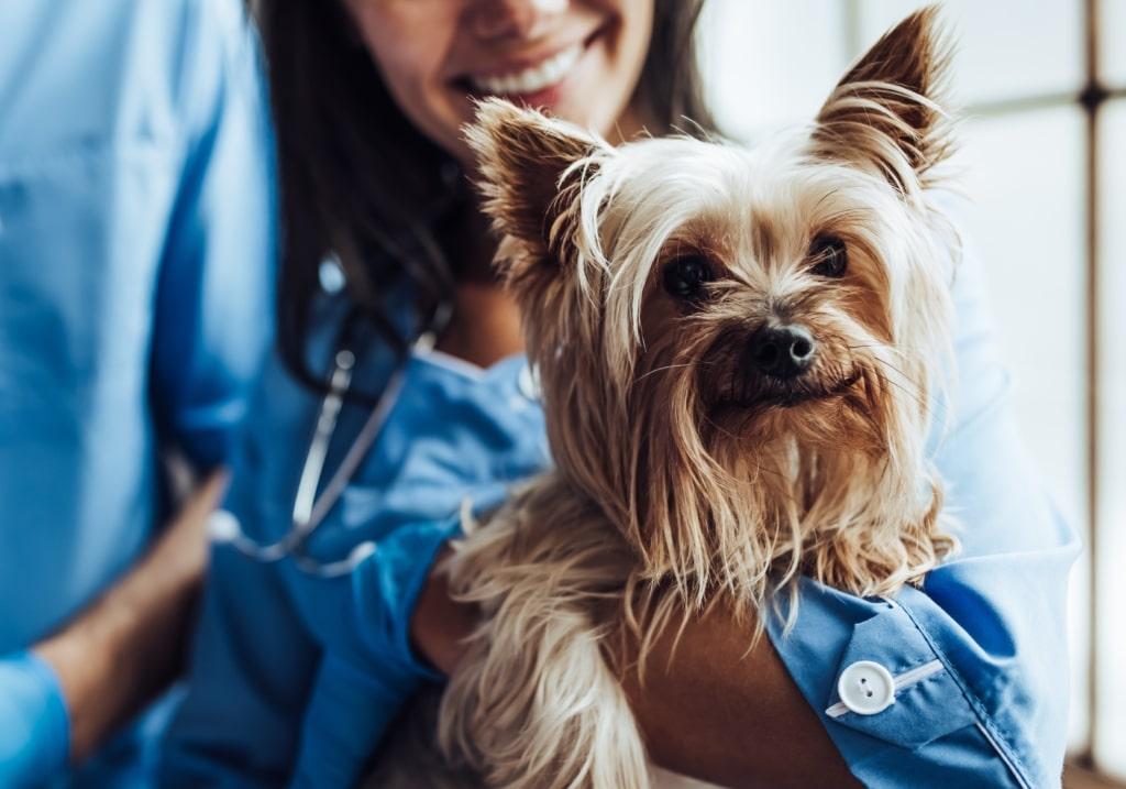 Så förbereder du hunden inför veterinärbesöket – med veterinär Elin Lindell