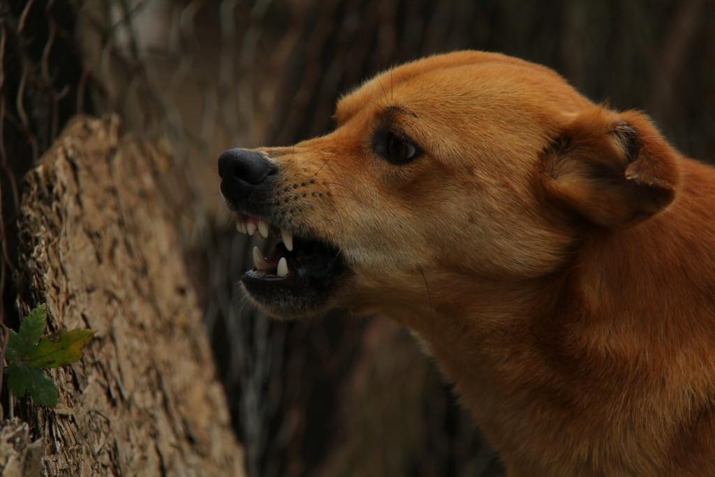 Hunden morrar! Vad ska jag göra?